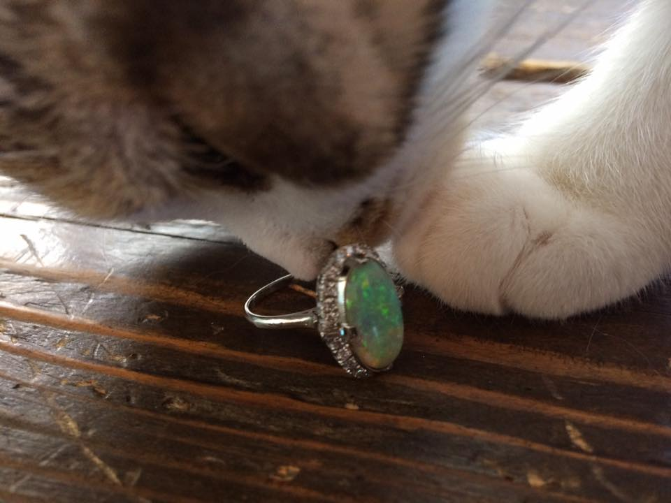 猫&オパール